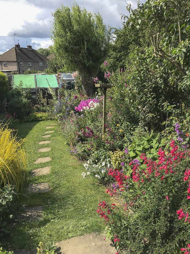 My garden July