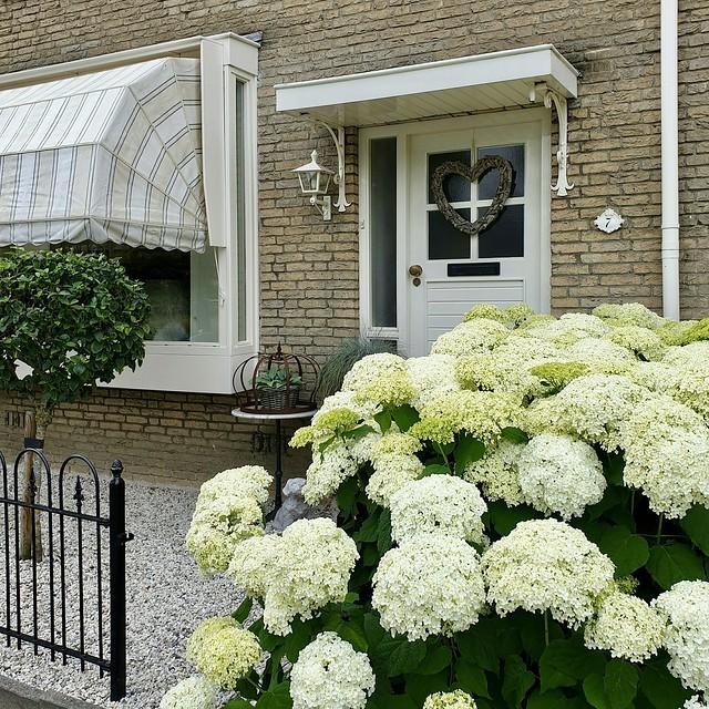 Voortuin landelijk met hortensia's