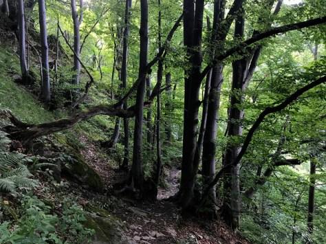Boyana - Walking to the Waterfall