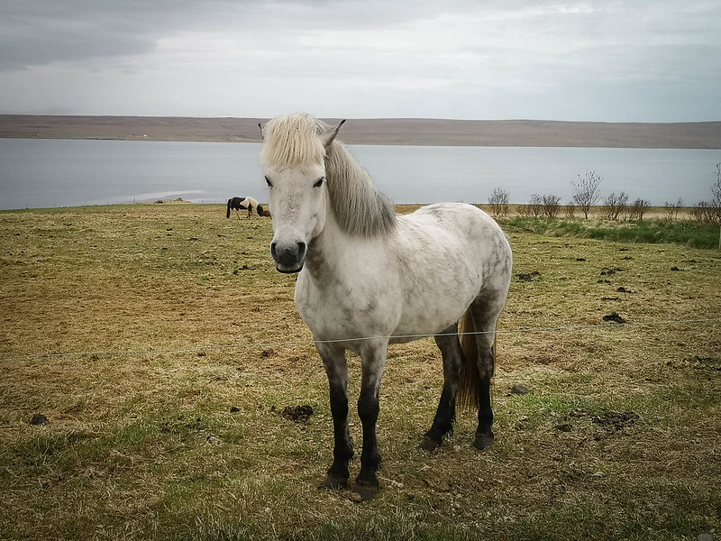 Pohjois-Islanti (7)