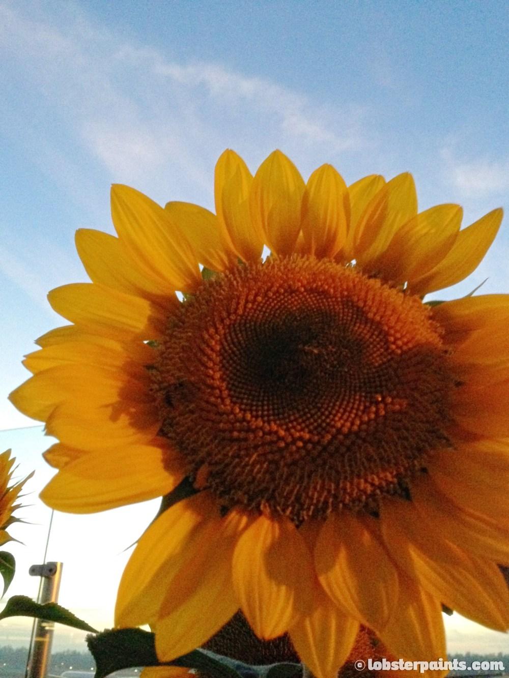 sunflower-garden--changi-airport-t2-singapore_13620427023_o