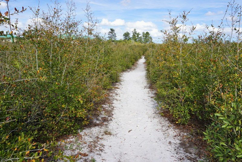 #WingsOfTheWest Mural Trail:  Lyonia Preserve in West Volusia County, Fla., March 2019