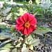 Flora flores Limerick Republica de Irlanda 10