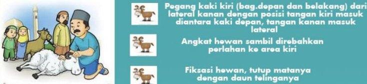 teknik-merobohkan-kambing