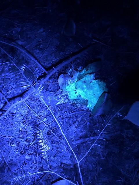 Aaron - mushroom ultraviolet