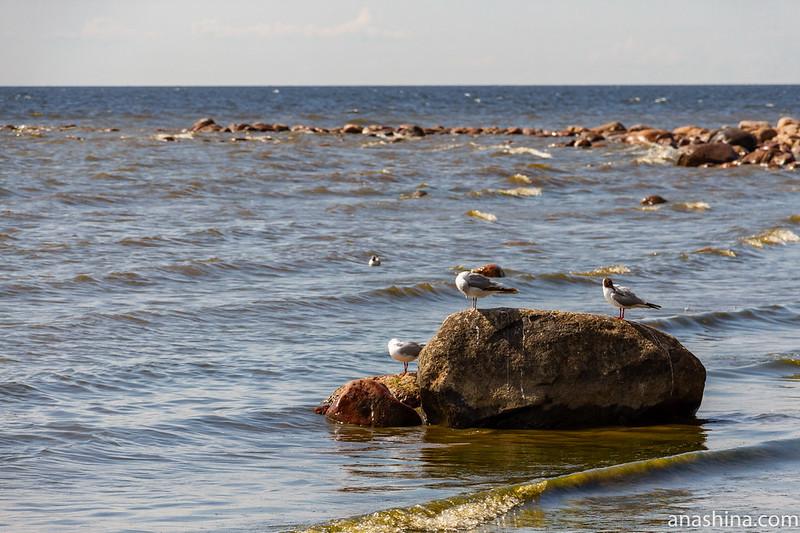 Мыс Флотский, Финский залив