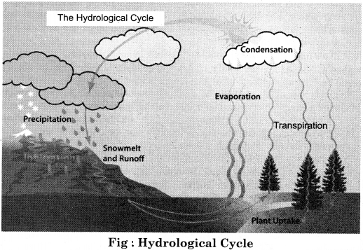 RBSE Solutions for Class 11 Physical Geography Chapter 17 Hydrological Cycle and Distribution of Water Bodies 1