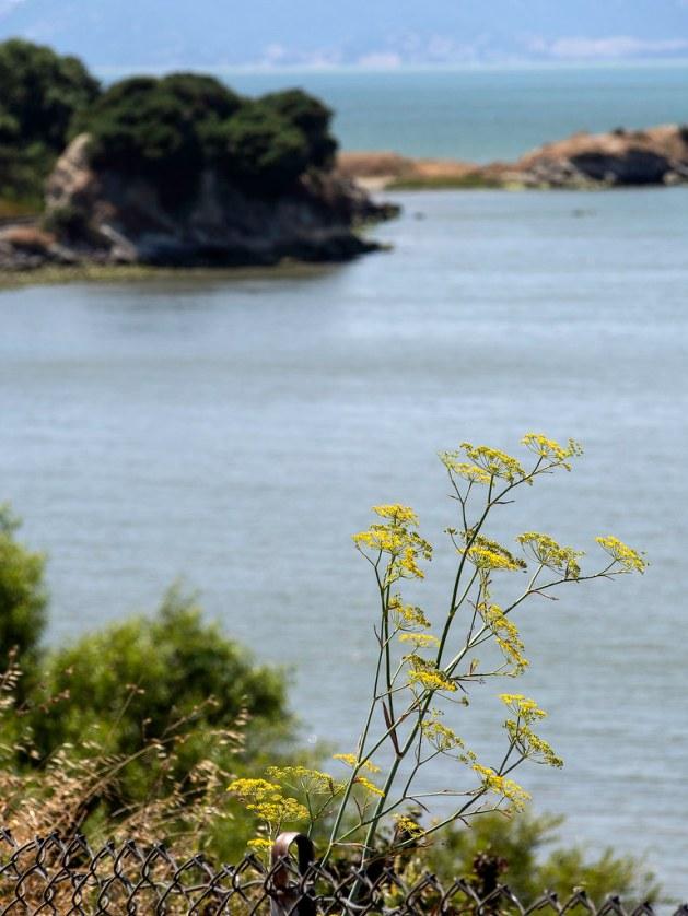 Pinole Shores Bay Trail