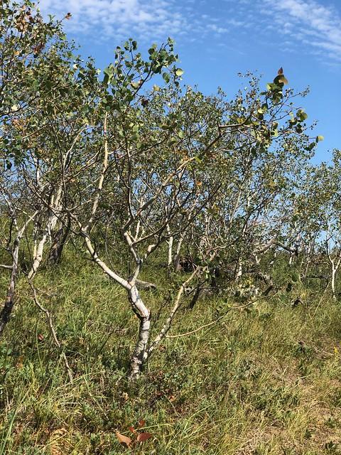 Douglas Provincial Park - little tree