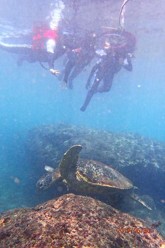 屏東小琉球:浮潛看見九隻海龜