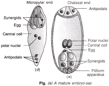 ISC Class 12 Biology Previous Year Question Papers Solved 2011 3