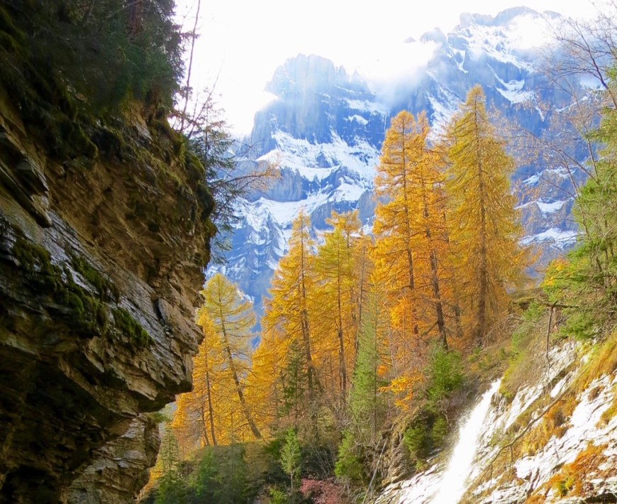 Snow and yellow colored trees in front of a mountain peak