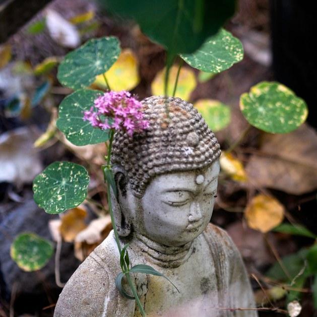 Jupiter Buddha