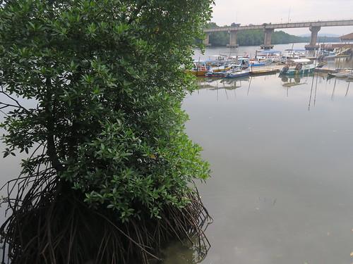 【2019再訪馬來西亞雙溪大年、檳城】新文英碼頭、紅樹林保護區、布秧谷考古博物館
