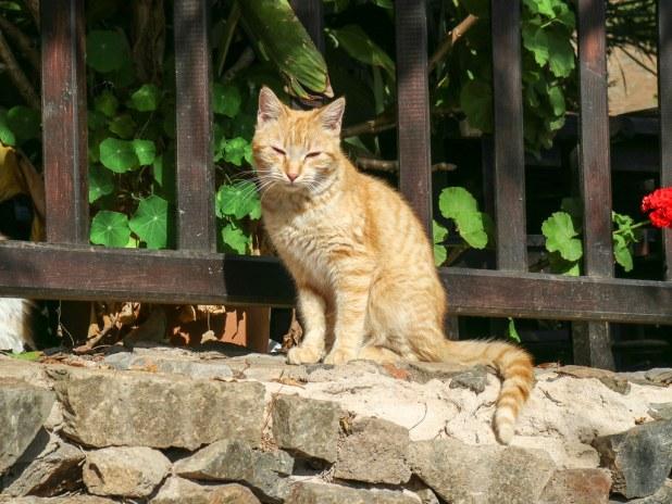 Gato en Betancuria