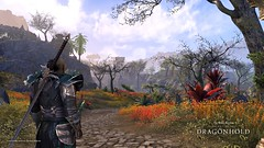 Dragonhold_TheScorch_Wildflowers