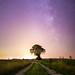 Ciel mon arbre #4
