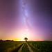 Ciel mon arbre #1