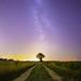 Ciel mon arbre #2