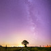 Ciel mon arbre #3