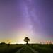 Ciel mon arbre #5