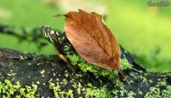 Leaf shell enough alone