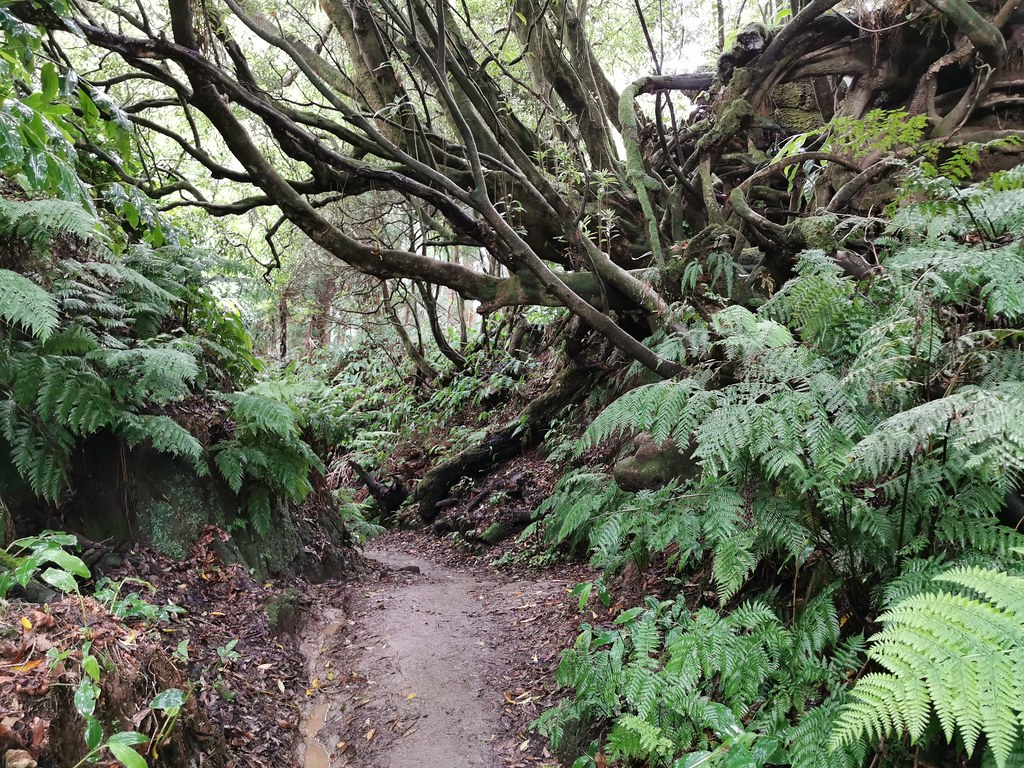 Flora sendero bajando de Mirador Pico do Ferro Isla San Miguel Azores Portugal 09