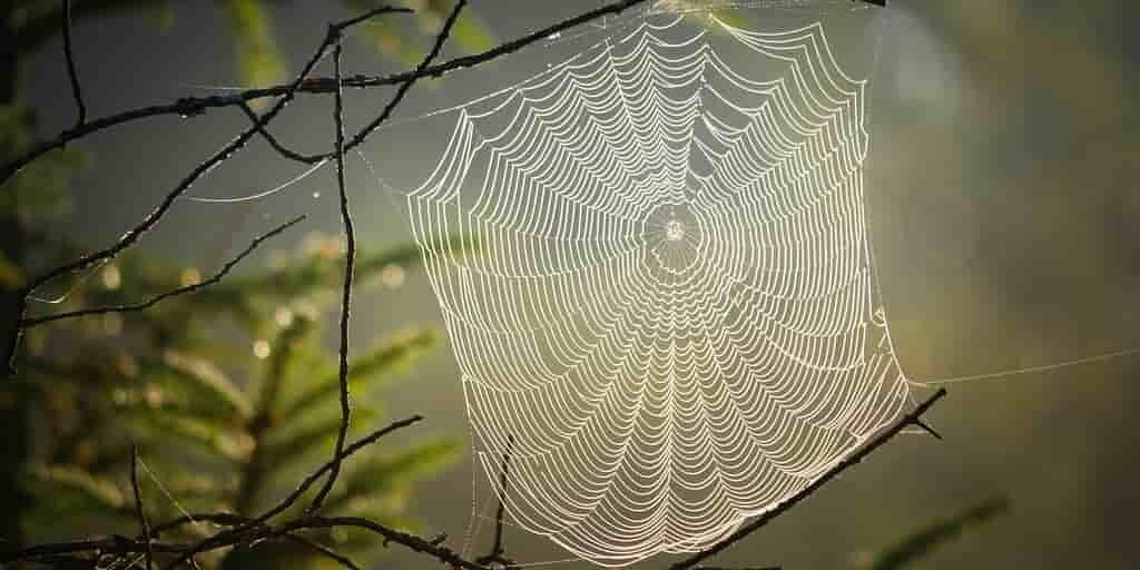 plastique-soie-araignée0et-fibres-de-bois