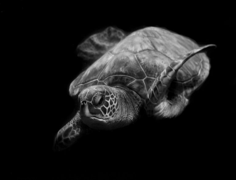 Portrait of a sea turtle