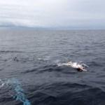 Luca Pozzi completa lo Stretto di Tsugaru con l'obiettivo dei Seven Oceans