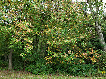 Photo of fall foliage beginning to show