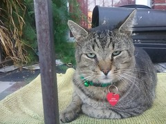 Bob's Cat