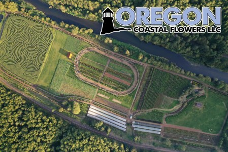 Aerial Oregon Coastal Flowers