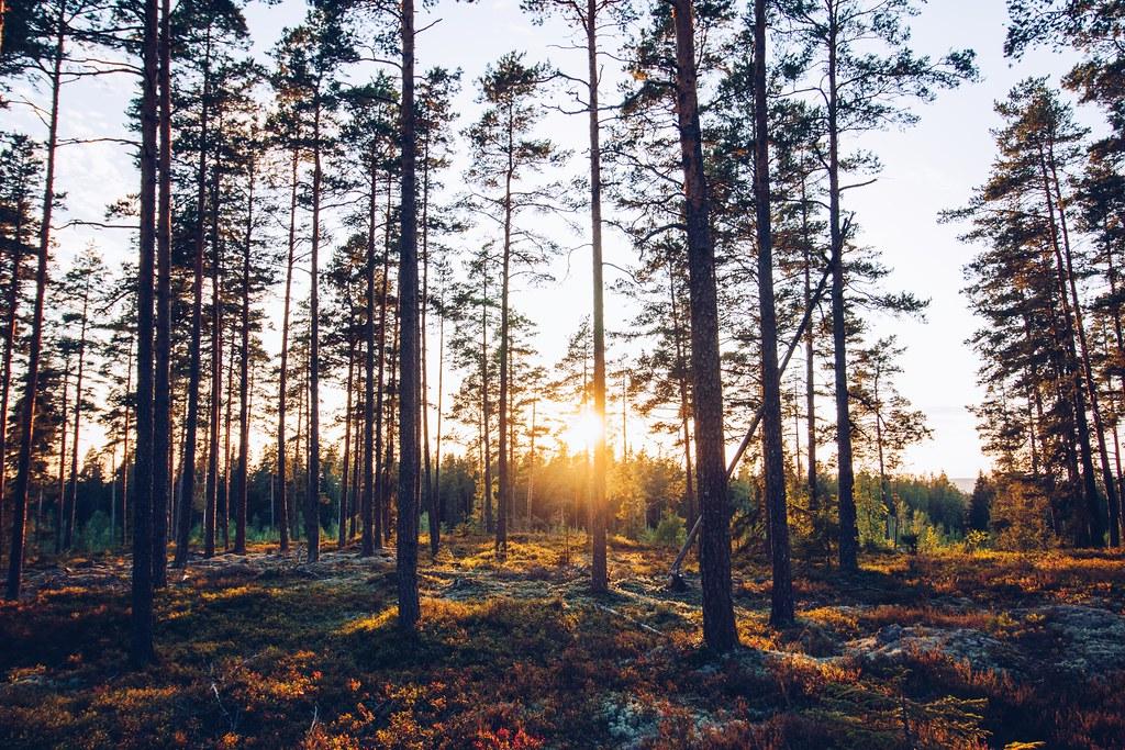 Gyllene timmen på berget - reaktionista.se