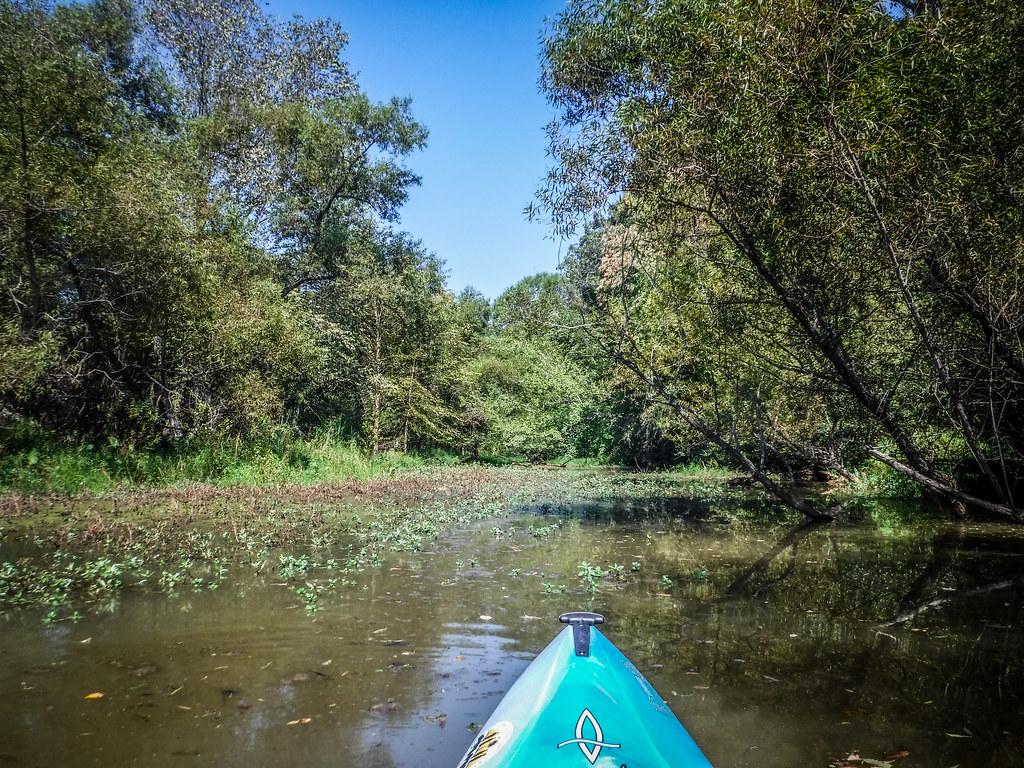 Berry Shoals Pond-8