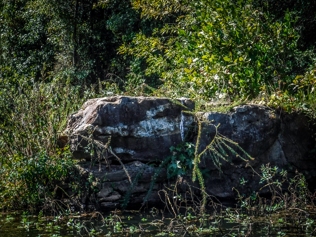 Berry Shoals Pond-28