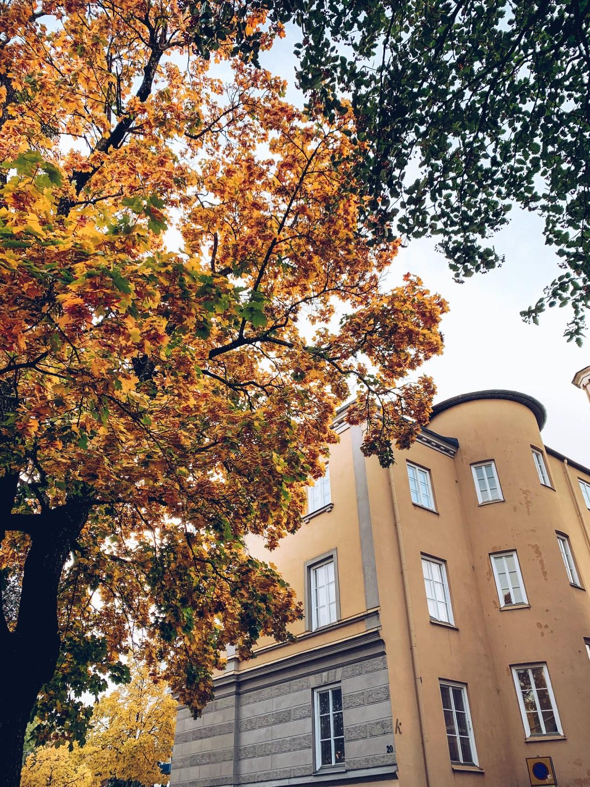 Höst i Eskilstuna - reaktionista.se