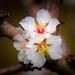Nestled blooms