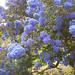 Blue (ish)