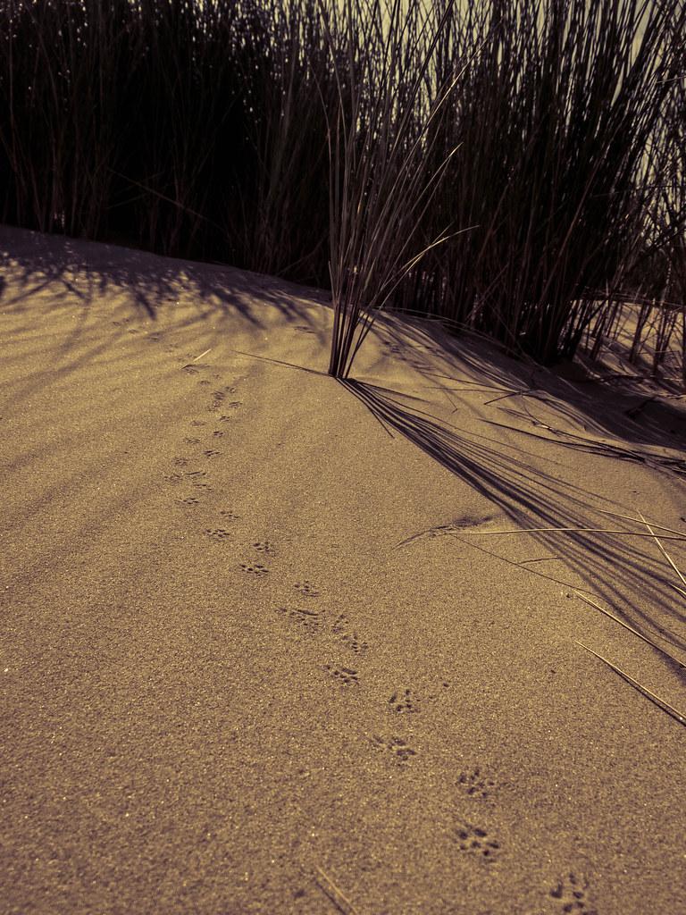 Stappen in het zand
