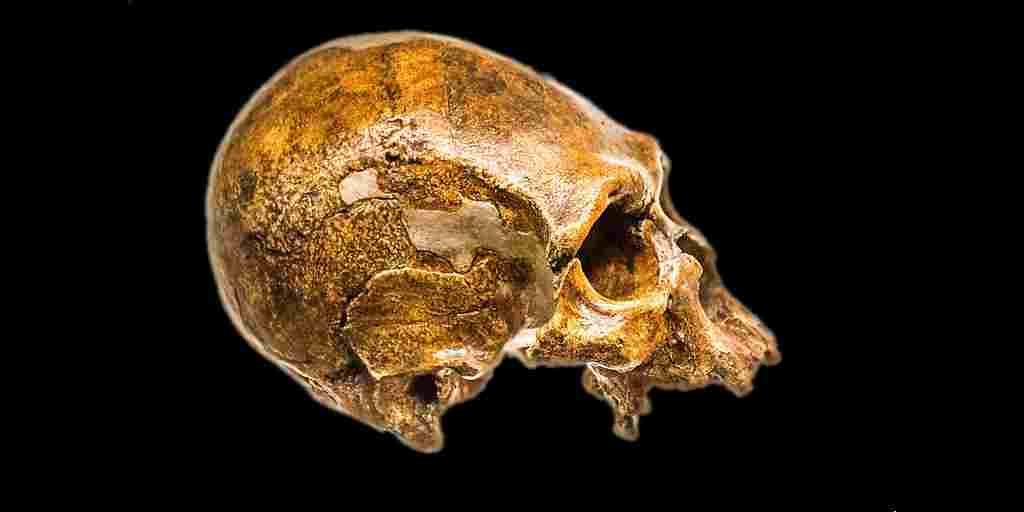Néandertaliens-gènes-différences-humains-modernes