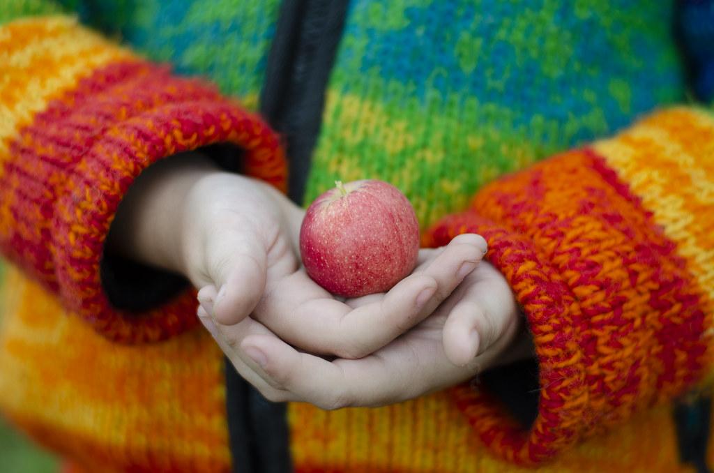 apple picking - 11