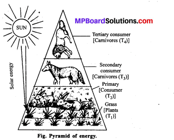 MP Board Class 12th Biology Solutions Chapter 14 Ecosystem