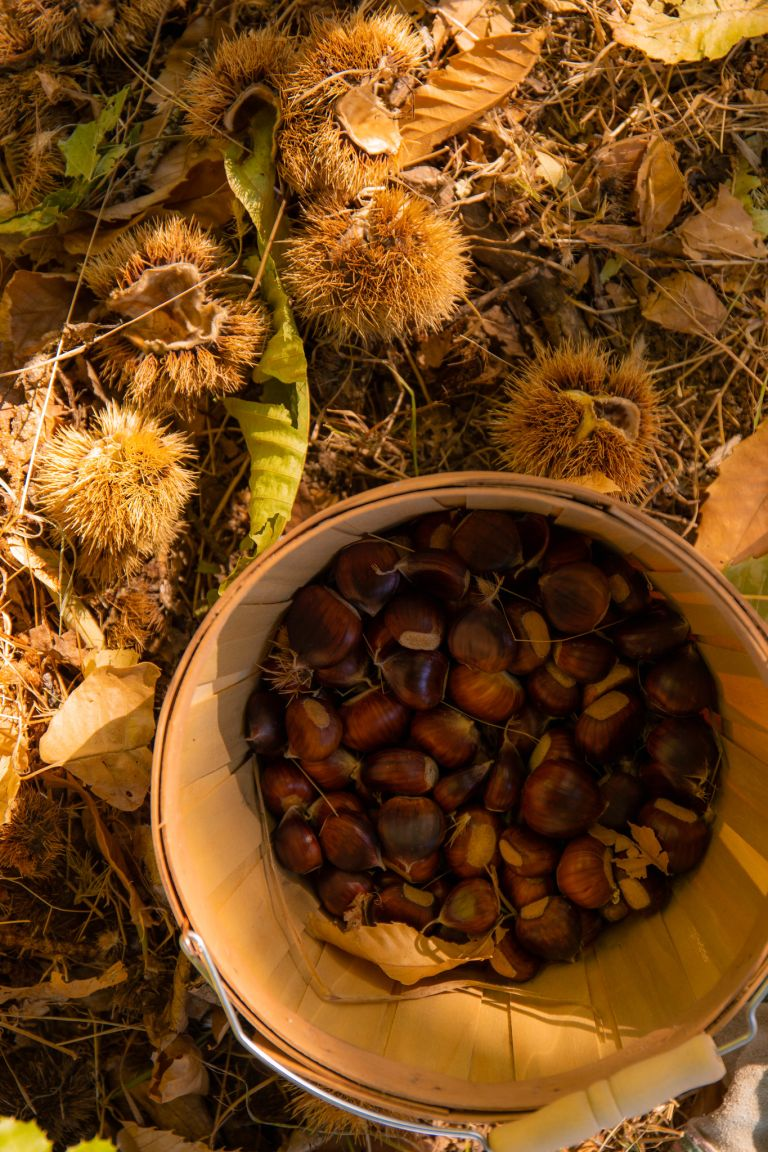 10.26. Skyline Chestnuts