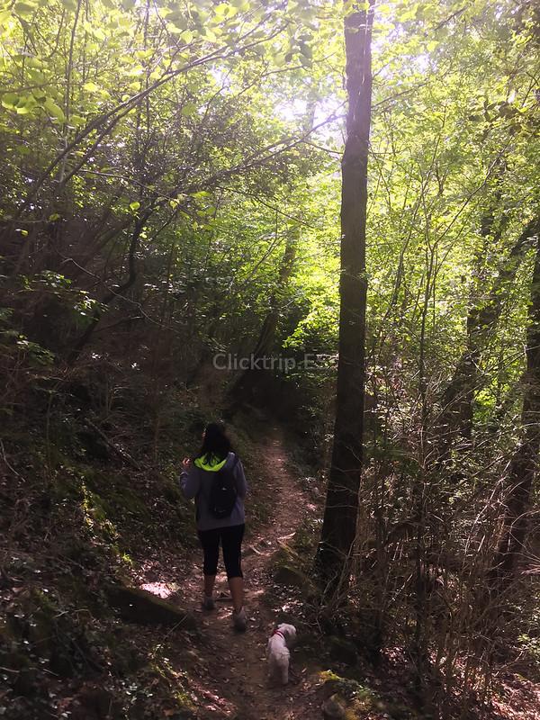 Camino a seguir en la ruta para llegar al Salt del Roure (Joanetes) Vall d'en Bas | Click_Trip