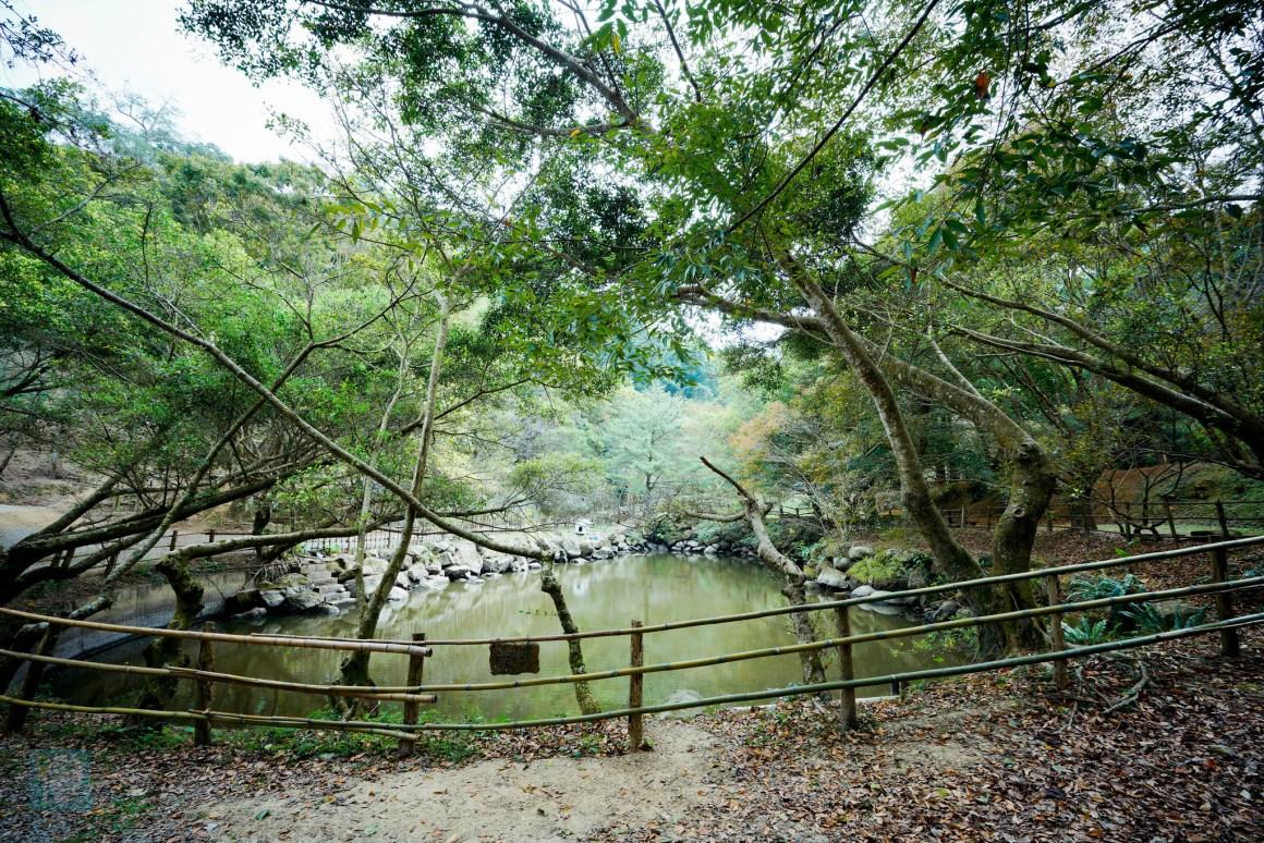 苗栗景觀餐廳 綠葉方舟 EDIT-580