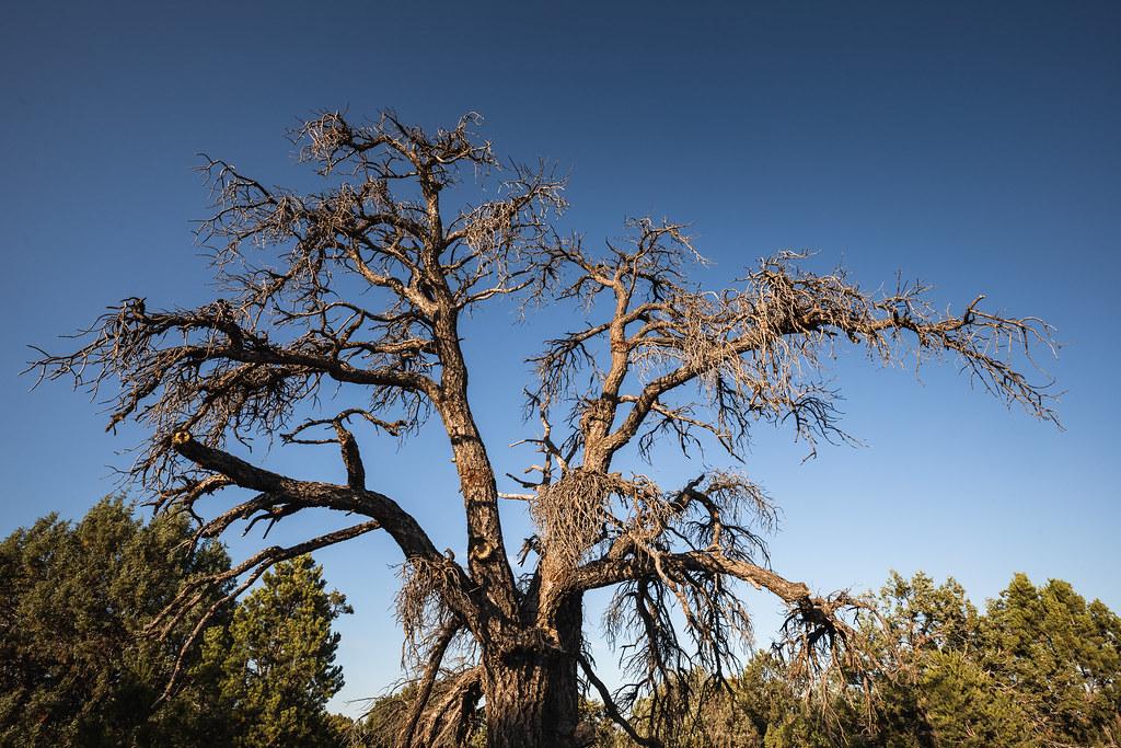 Baum ohne Blätter Felix Ullli Flickr