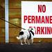 NO PERMANENT BARKING !!? . . . woof