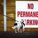 NO PERMANENT BARKING !!? . . . woof