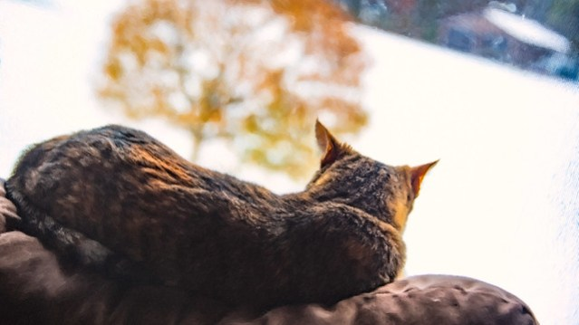Spice the cat, looking out at snow.